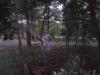 odkomarzanie lasów