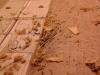 czyszczenie sufitu z odchodów szczurów