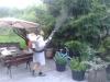 usuwanie komarów